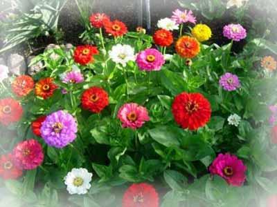 Классификация однолетних растений.