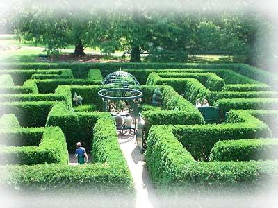 Изгородь из живого кустарника в вашем саду.