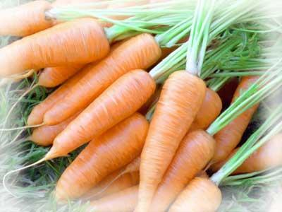 Почему проростает морковь при хранении в зимний период?