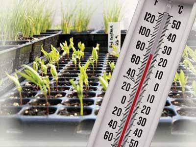 Температурный режим при выращивании рассады.