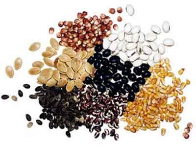 Стратификация семян - что это такое?