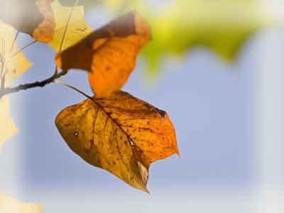 Почему желтеют края листьев у растений?