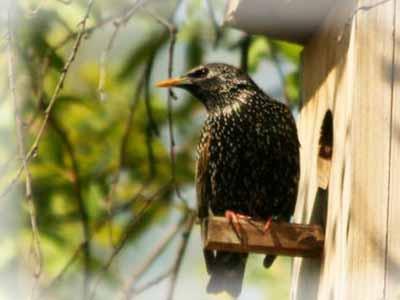 Птицы на садовом участке.