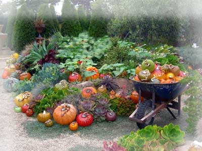 Огород не заменит цветники на дачном участке.