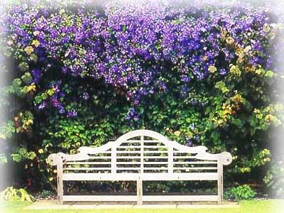 Вьющиеся растения садового участка (ч1).