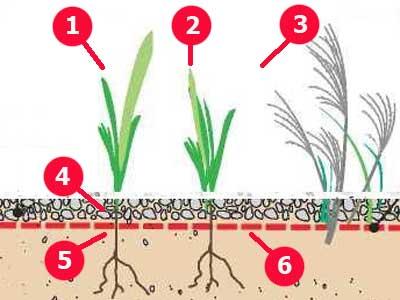 Добавки к почве