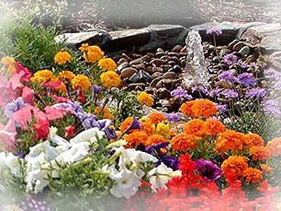 Виды растений на садовом участке.