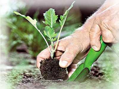 Выбор растений для вашего сада
