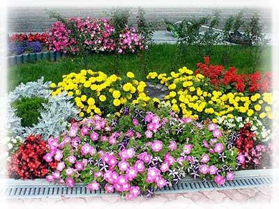 Садоводство ↓ украсьте дачу цветами