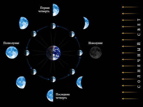 Лунный календарь садовода: фазы луны